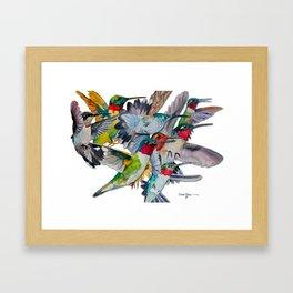 Multi Hummingbirds Framed Art Print