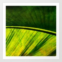 banana leaf Art Prints featuring Banana leaf by helsch photography