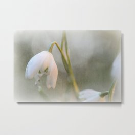 Faded Snowdrop Metal Print