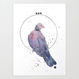 Fancy Pidgeon Art Print