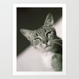 Beautiful Feline, Full of Sass Art Print