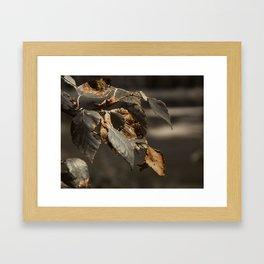 Gold Leaves Framed Art Print