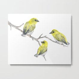 Finch Bird Metal Print