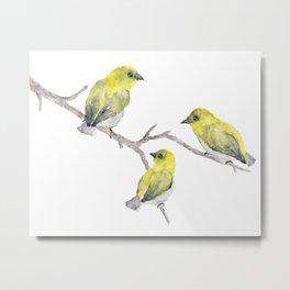 Finch Bird Metal Print