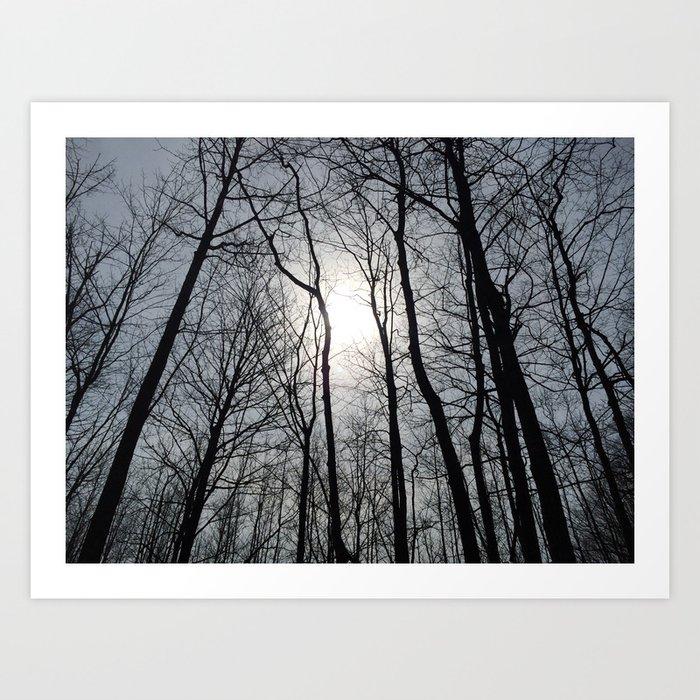White Sky, Black Trees Art Print
