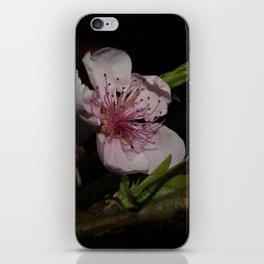 Flowers in Winter iPhone Skin