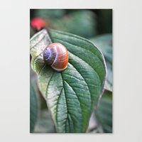 snail Canvas Prints featuring snail by  Agostino Lo Coco