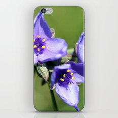 Spiderwort iPhone & iPod Skin