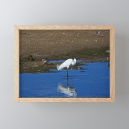 Snowy Egret at Ding Framed Mini Art Print