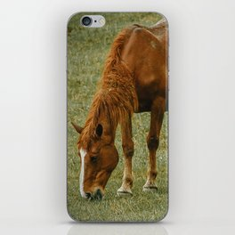 Horse And Foal iPhone Skin