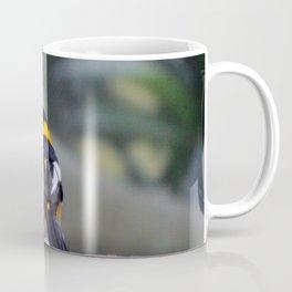 Troupial Feathers Coffee Mug