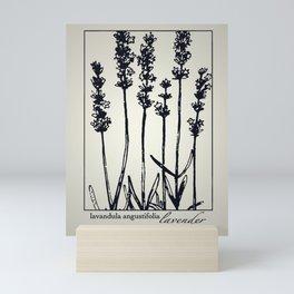 Lavender - Botanical Illustration Collection Mini Art Print
