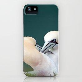 Northern Gannets (Morus bassanus) iPhone Case