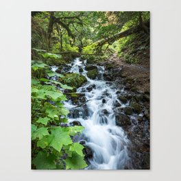 Wahkeena Creek Cascades Canvas Print