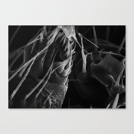 Spinnerets Canvas Print
