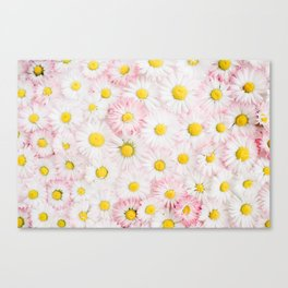 Daisy Flowers Canvas Print