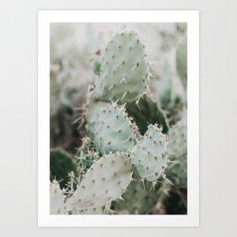 Cactus Closeup Art Print