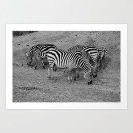 Cebras Art Print