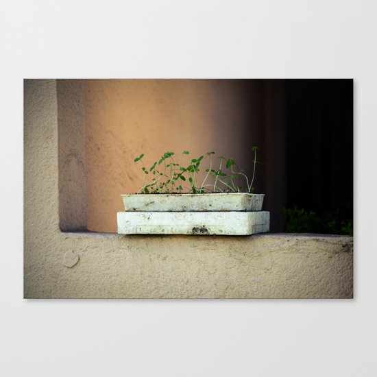 Seedlings Canvas Print