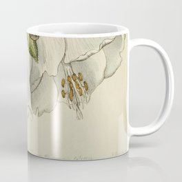 Edwards' Botanical Register Coffee Mug