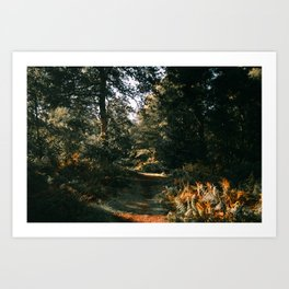 Autumnal Atmosphere Art Print