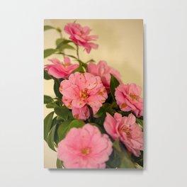 Camellia flowers Metal Print