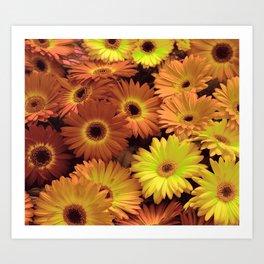 Daisy Flowers Garden Photography Arts Art Print