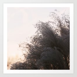 Winter's Breath Art Print