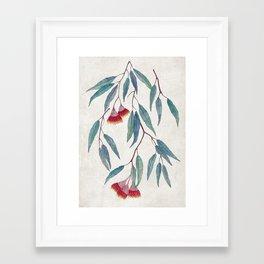Eucalyptus leaves and flowers on light Framed Art Print