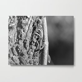 Cat's claw creeper Metal Print