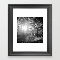 Sundown in the Forest Framed Art Print
