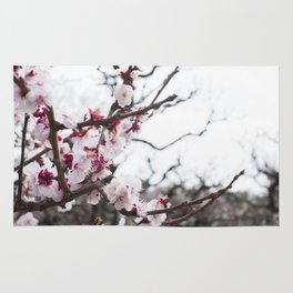 PLUM BLOSSOMS Edition03 Rug