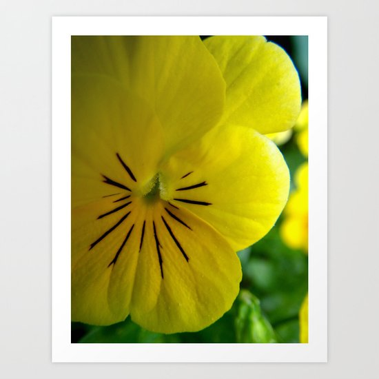 Yellow Pansy Art Print
