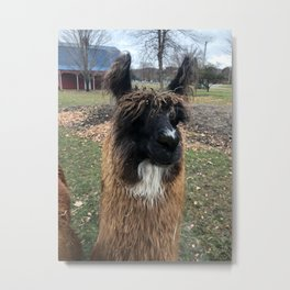 Hello Llama Llama Metal Print
