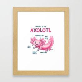 Anatomy of the Axolotl Framed Art Print