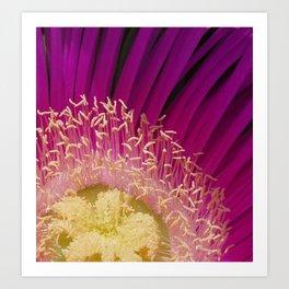 Pink Flower Pollen Art Print