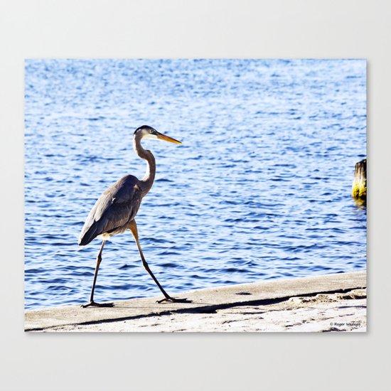 Blue Heron Strut Canvas Print