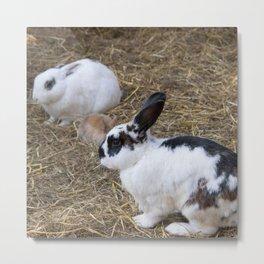 Cute rabbit family AN03 Metal Print