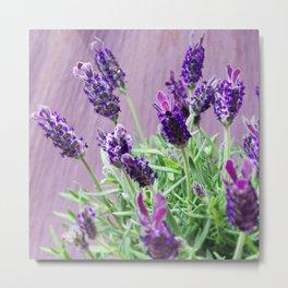 Lavenderdreams Metal Print