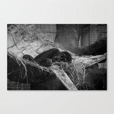 Sleepy Soul Canvas Print