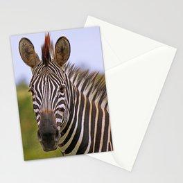 Zebra portrait, Africa wildlife Stationery Cards