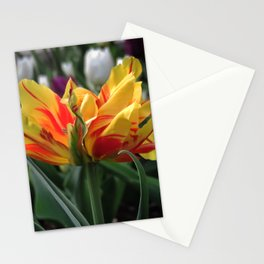 fiery tulip - bright yellow and red close-up Stationery Cards