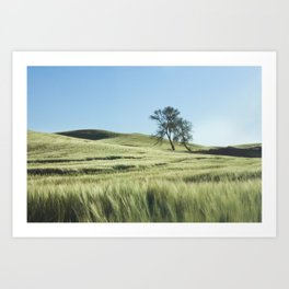 Lone Tree Photography Print Art Print