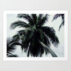 Moody Palm Trees Art Print