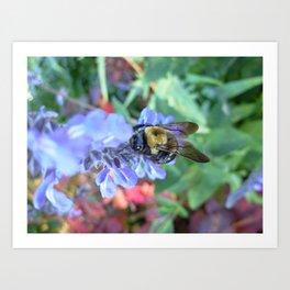 Spring Bee in NYC Art Print