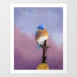 Backyard Bluebird Art Print