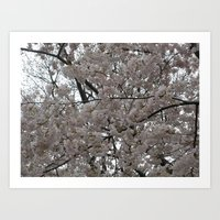 Tidal Basin Blossoms Art Print