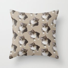beige tan grey american wirehair cat pattern Throw Pillow