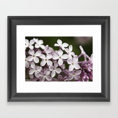 Lilac blossoms Framed Art Print