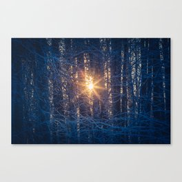 Into the Light, nature scene forest woods Canvas Print